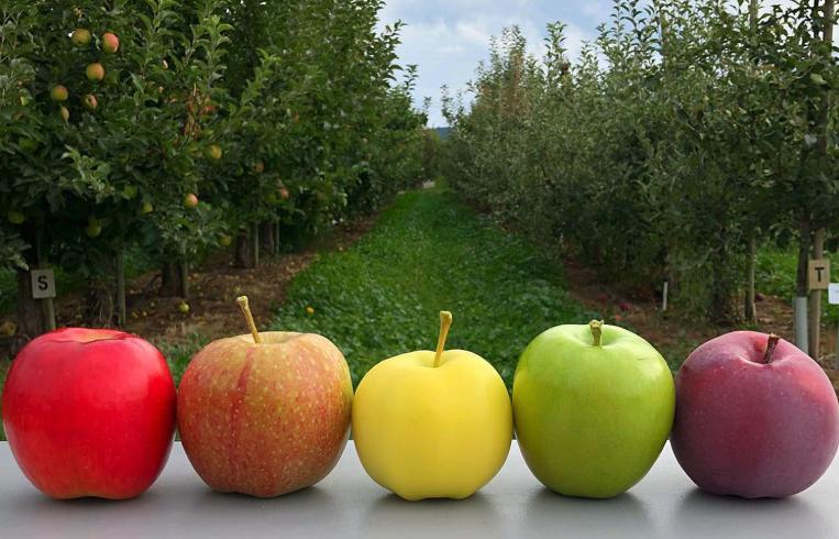 Kiyokawa Family Orchards